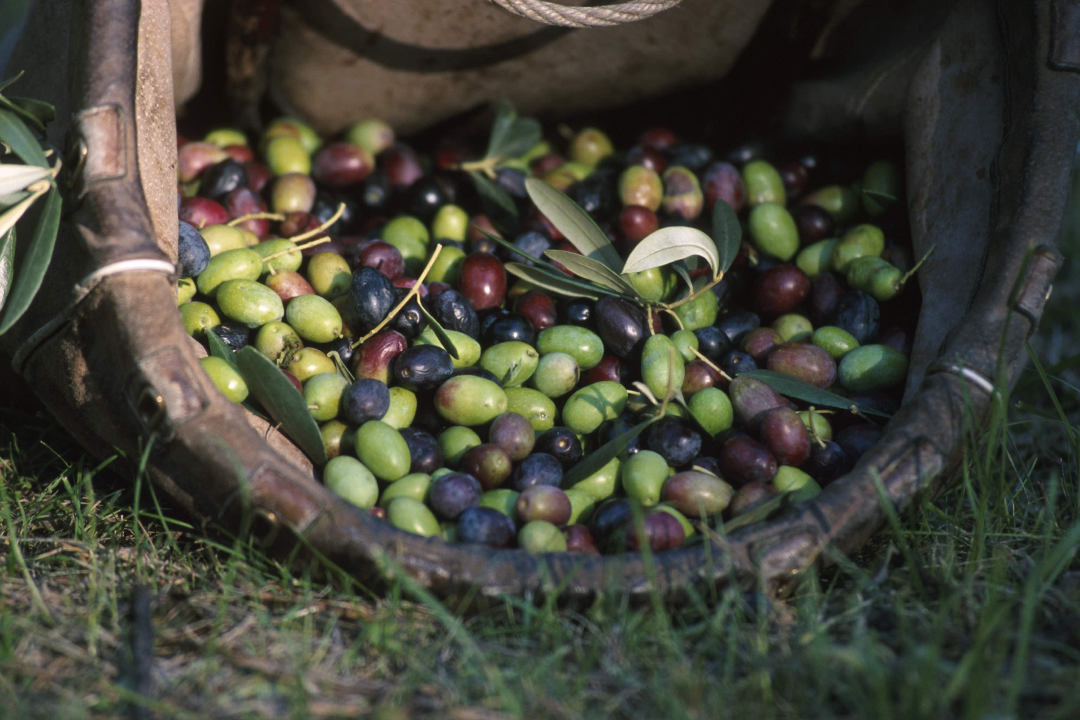 Trattamento Legno Per Uso Alimentare taglieri in legno d'olivo, in faggio, frassino e bambù